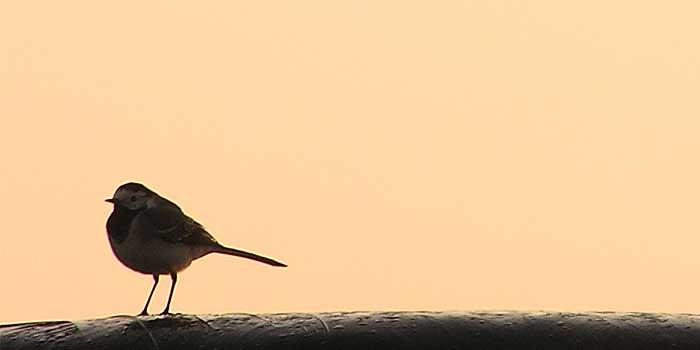 Vogels Kijken in Nederland Tips Vogelgebieden